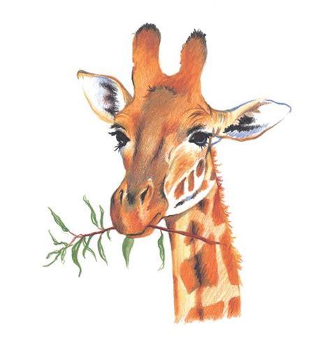 draw giraffe  colored pencil walter foster books