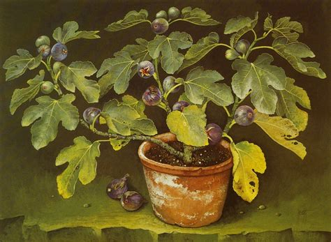 photo fig tree in terracotta pot 56x84 cms gouache 1989 escofet jose album vadim alyoshin