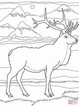 Elk Coloring Pages Printable Wapiti Deer Bull Drawing Super Nature Adult Colouring Print Easy Animals Moose Supercoloring Cartoons Sheets Drawings sketch template