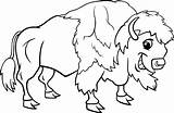 Buffalo Coloring Bison American Pages Animal Cartoon Clipart Wild Water Kleurplaat Bizon Funny Vector Illustration Cute Clip Drawings Baby Animals sketch template