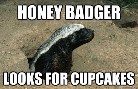 Meme Honey Badger - honey badger meme memes