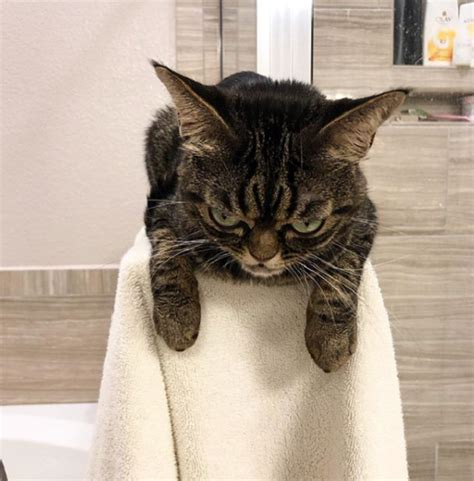 angry kitzia    grumpy cat  didnt