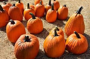 Free, Images, Fall, Spooky, Celebration, Orange, Harvest, Produce, Vegetable, Autumn, Holiday
