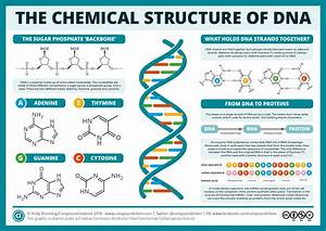The Chemical Structure Of Dna  U2013 Compound Interest