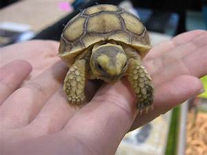 TIPS FOR CHOOSING PETS – REPTILE - TURTLE..... TURTLES ARE ...