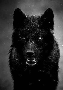ferocious wolf | Tumblr
