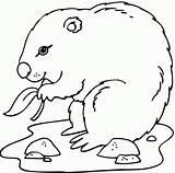 Groundhog Coloring Marmotte Coloriage Sheets Dort Qui Printables Imprimer Dessiner Gratuit Bebe Sheet Printable Popular Spring Worksheets Danieguto Bestcoloringpagesforkids sketch template
