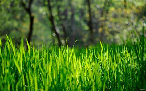 Spring Grass Hd Desktop Wallpaper  Hd Desktop Wallpaper