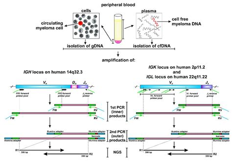 Next Generation Sequencing Illumina Monitoring Myeloma By Next Generation Sequencing