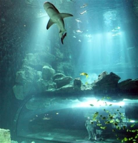 aquarium de cineaqua hours address attraction reviews tripadvisor