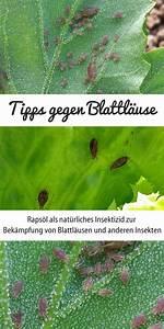 Was Hilft Gegen Blattläuse : raps l gegen blattl use nat rliches insektizid f r ~ Articles-book.com Haus und Dekorationen
