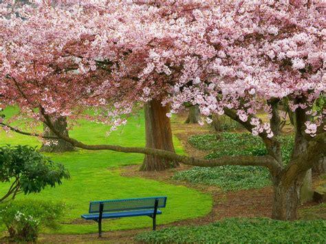 parque  flores de primavera imagenes  fotos