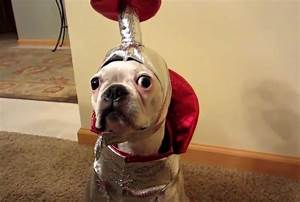 Check Out These Super Pawesome Cats And Dogs Dressed Like ...