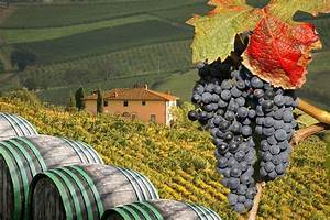 An Italian Wine Tasting Journey: From Piedmont to Tuscany ...