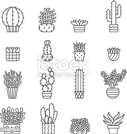 succulents  cacti outline vector icons set minimalistic design stock vector art  images
