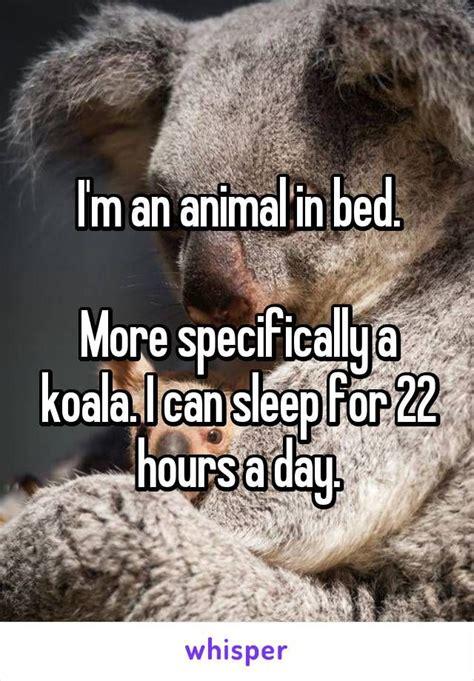 Animal In Bed Meme - 25 best ideas about koala meme on pinterest salad meme shock meme and donut meme