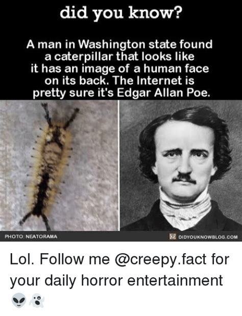 Edgar Allen Poe Meme - did you know a man in washington state found a caterpillar that looks like it has an image of a