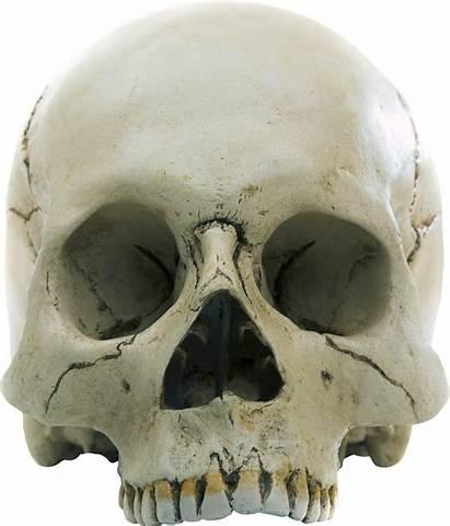 Skull Transparent Background Purepng Human Pngs Halloween