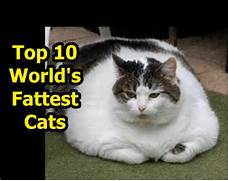 fattest cat in the world guinness 2017