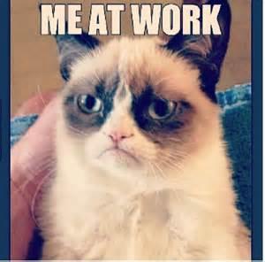 cat work grumpy cat quotes about work quotesgram