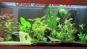 Liter Aquarium Berechnen : 180 liter aquarium von juwel youtube ~ Themetempest.com Abrechnung