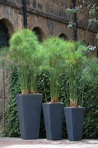 Sichtschutz Mit Pflanzen : sichtschutz mit pflanzen welche pflanzen als sichtschutz ~ Michelbontemps.com Haus und Dekorationen