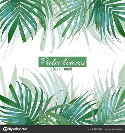 Palm Background Free Photo Palm Leaf Background Plant Organic Palm