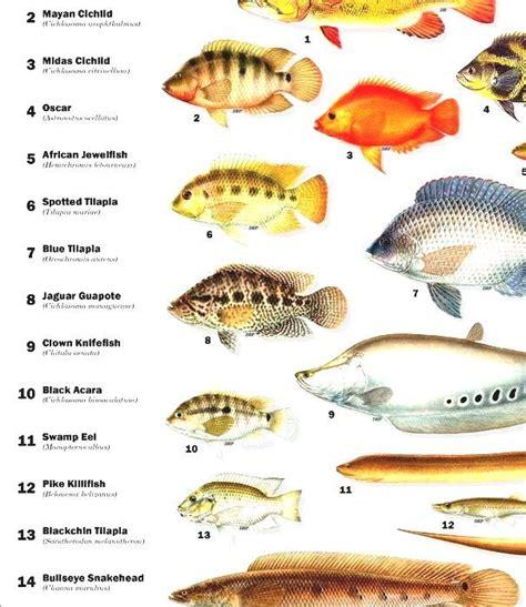 list  freshwater aquarium fish species freshwater fish
