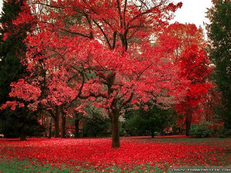 Beautiful Autumn Trees Wallpapers by Beautiful Autumn Wallpapers 3 Seasonal Frankenstein