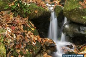 Travel Guide To The Roaring Fork Motor Nature Trail At