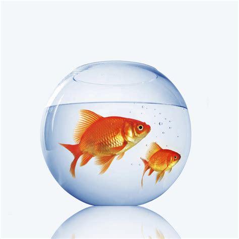 cherche recherche bocal pour poissons rouges gratuit