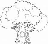 Coloring Tree Oak Trunk Colouring Printable Outline Drawing Banyan Leaves Without History Drawings Draw Getcolorings Getdrawings Paintingvalley Popular Coloringhome sketch template