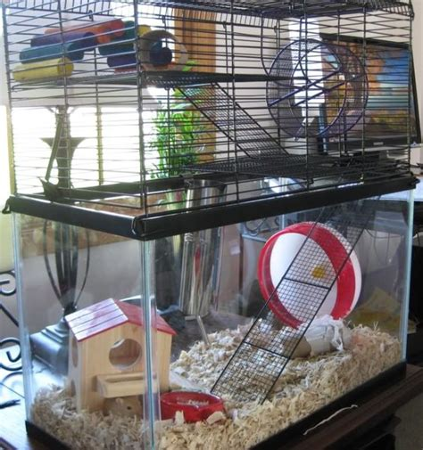 aquarium cages for hamsters housing gerbils has been an experience at the shelter we re still improving our setup a
