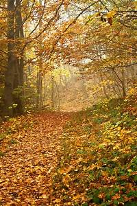 Leaf, autumn, wallpaper and fall wallpapers HD photo by ...  Fall