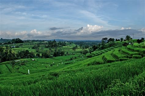 beautiful rice field  jatiluwih bali world