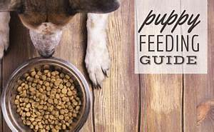 how much food should i feed my puppy