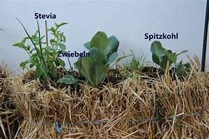 11 Pflanzen Methode : g rtnern auf stroh ~ Lizthompson.info Haus und Dekorationen