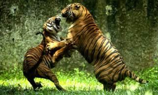 roaring argument  love lost