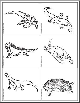 reptile and hibian flashcards identify the