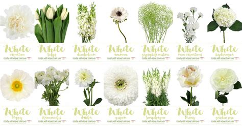types  white flowers  pictures  names
