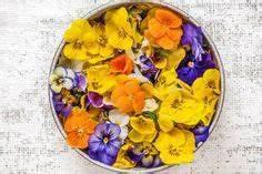 Welche Blumen Kann Man Essen : essbare bl ten essbare bl ten essbare blumen und ~ Watch28wear.com Haus und Dekorationen