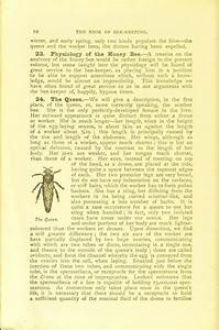 The Book Of Bee