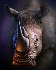 White Rhino Art