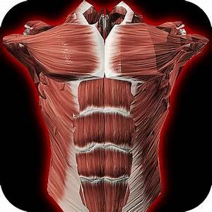 Download Biodigital Human