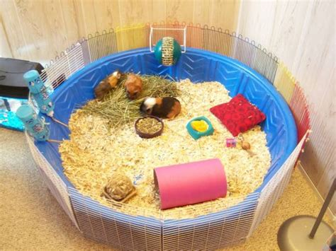 Hamster Bedding Petsmart by Kiddie Pool Guinea Pig Cage Petdiys