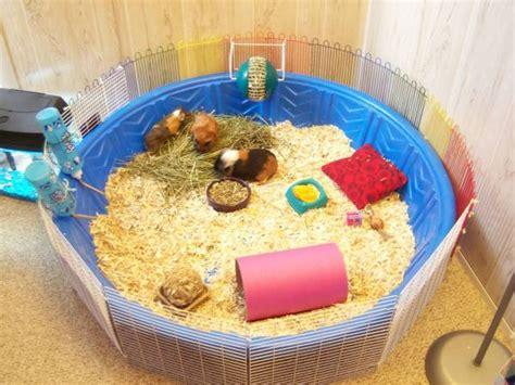 hamster bedding petsmart kiddie pool guinea pig cage petdiys