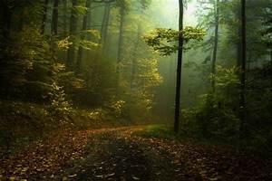Fall, Path, Mist, Forest, Shrubs, Morning, Landscape