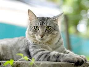 pet cats pets3000 pet supplies cats your pet cat