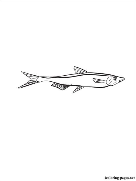 anchovy coloring page coloring pages
