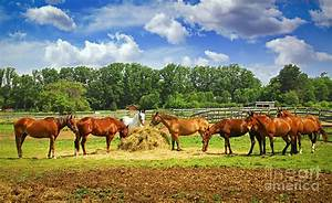 Horses At The Ranch Photograph by Elena Elisseeva